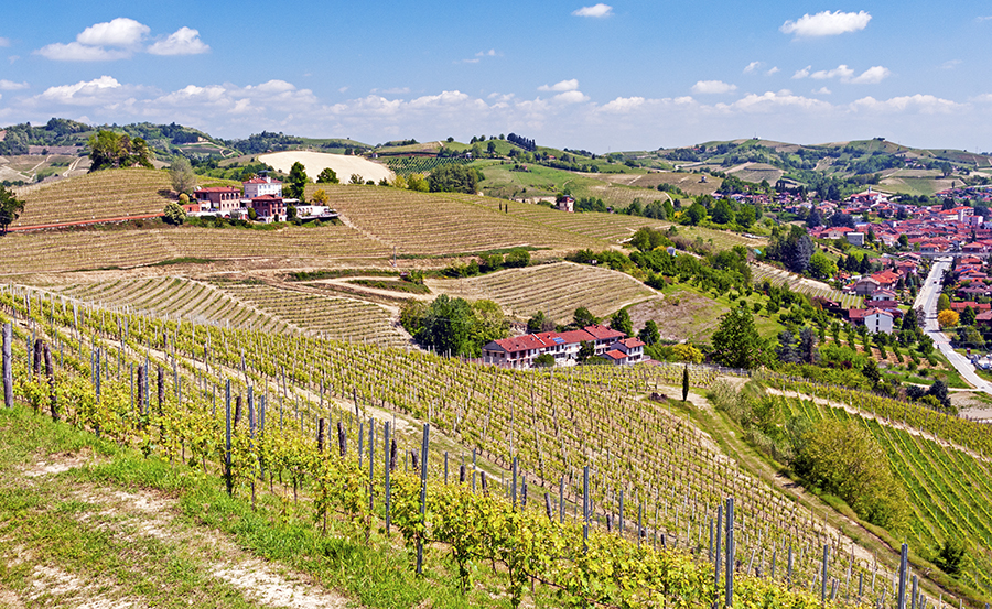 Matteo Correggia: An Amazing Winery in Piedmont Italy